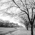 昭和28年頃-大学通り